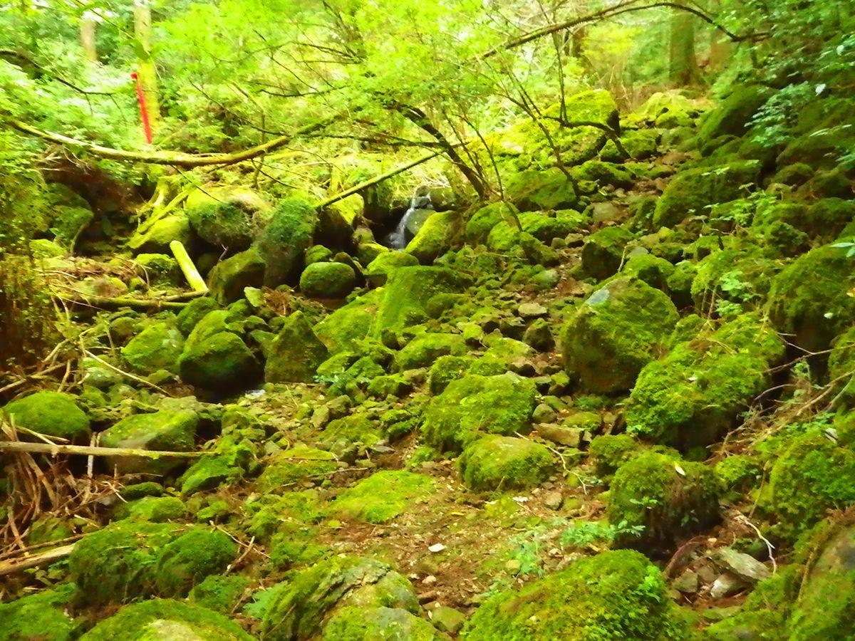 子ノ泊山3