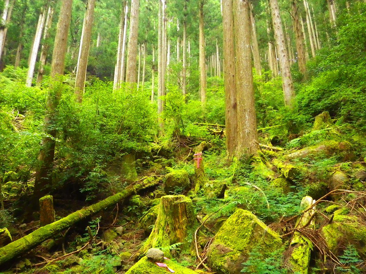 子ノ泊山4