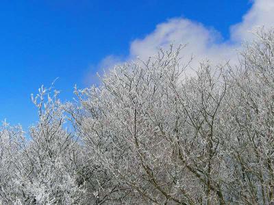 これほど霧氷があって青空と白が美しい