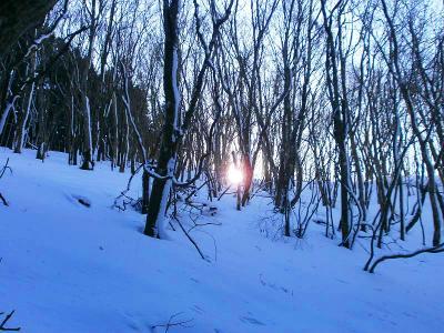 日が沈んできて木の下のほうに見えるのは珍しい景色かも