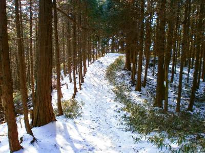 続いて高谷山を目指していく。また樹林帯の中に入ったが、気持ちの良い稜線歩きとなる