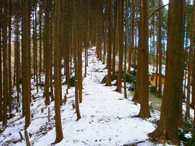 高谷山への登り。これはすぐだった