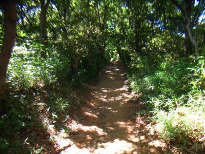 保久良神社からは登山道になる。最初は金鳥山のピークを目指す