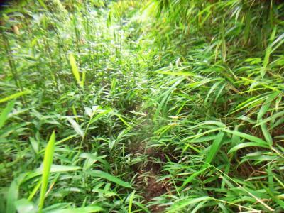 この道も踏み跡はあるものの草で覆われていた。あまり歩いてる人いないんだね