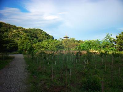 地図で確認すると十文字山山頂がこの辺らしいけど何もない。五重塔みたいなのが見えた